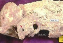 Photo of Researchers Find Evidence Of Sophisticated Brain Surgery 1,700 Years Ago