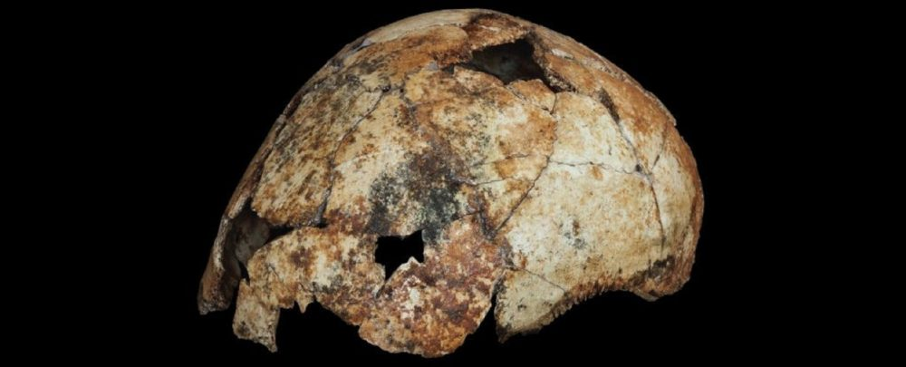 The ancient skullcap of DNH 134. Image Credit: Matthew V. Caruana.