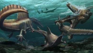 Photo of Scientists Have Found the First-Known Swimming Dinosaur
