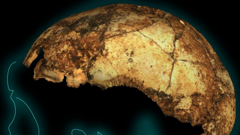 The reconstructed skull of DNH 134. Image Credit: Andy Herries, Jesse Martin and Renaud Joannes-Boya.
