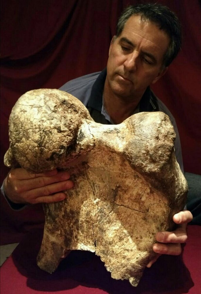 A researcher holding one of the fossilized remains of the giant creature. The remains were discovered in 2020. Image Credit: Agencia CTyS.