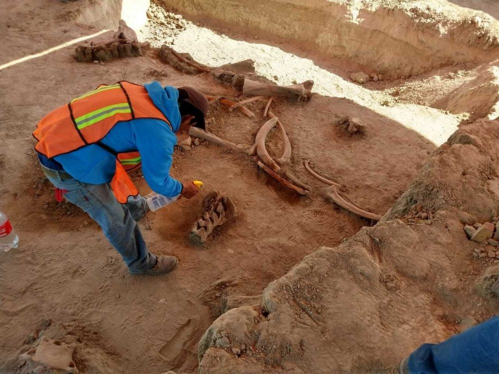 The mammoths bones are believed to be over 15,000 years old. Image Credit: Azteca Noticias / Twitter.