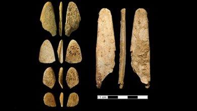 Photo of New Study of Neanderthal Tools Reveals They Were More Sophisticated Than Previously Thought