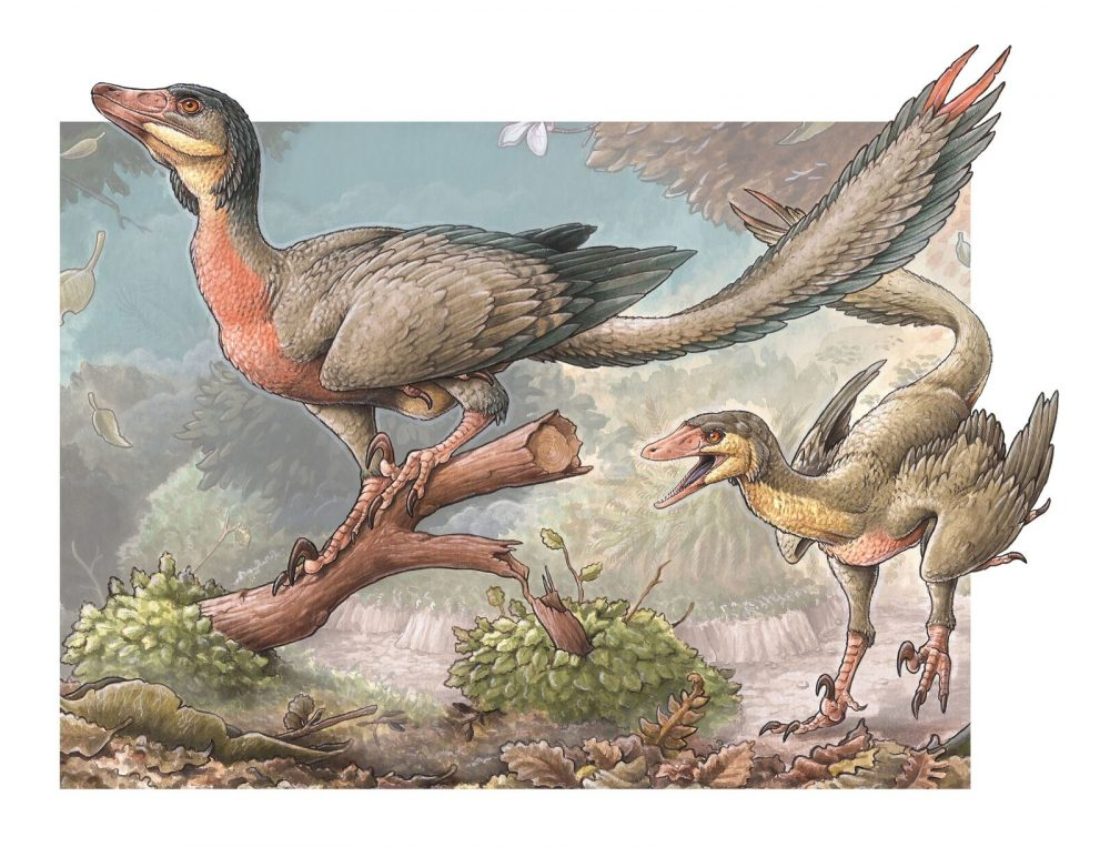 An artist's illustration of what the dinosaur may have looked like. Image Credit: http://www.ctys.com.ar/.