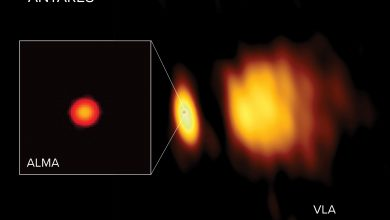 Radio images of Antares with ALMA and the VLA. Image Credit: ALMA (ESO/NAOJ/NRAO), E. O'Gorman; NRAO/AUI/NSF, S. Dagnello.