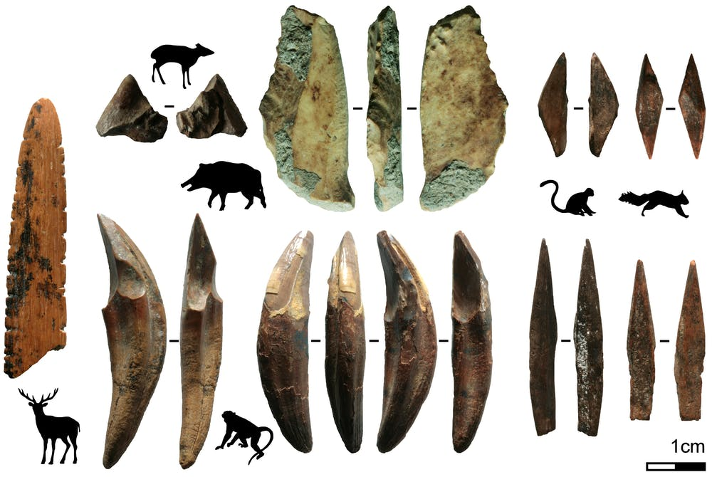 Seen here are the various tools made of bone and teeth from smaller mammals that were recovered from the Fa-Hien Lena cave in Sri Lanka. Image Credit: M. C. Langley.