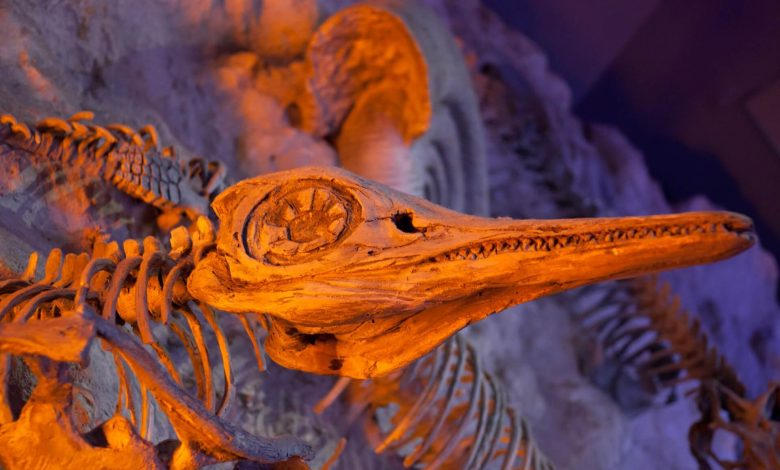An image of a fossilized animal. Jumpstory.