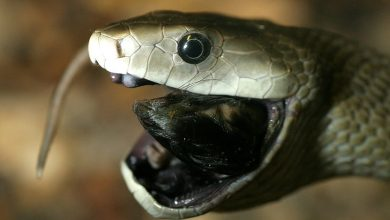 Photo of 5 Most Venomous Snakes In the World