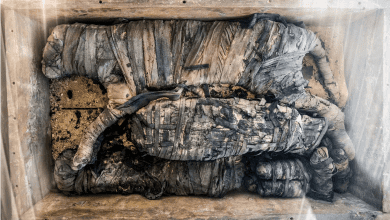 Photo of 15 Things You Should Know About Animal Mummies in Ancient Egypt