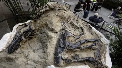Photo of 10 Interesting Facts About the Duelling Dinosaurs
