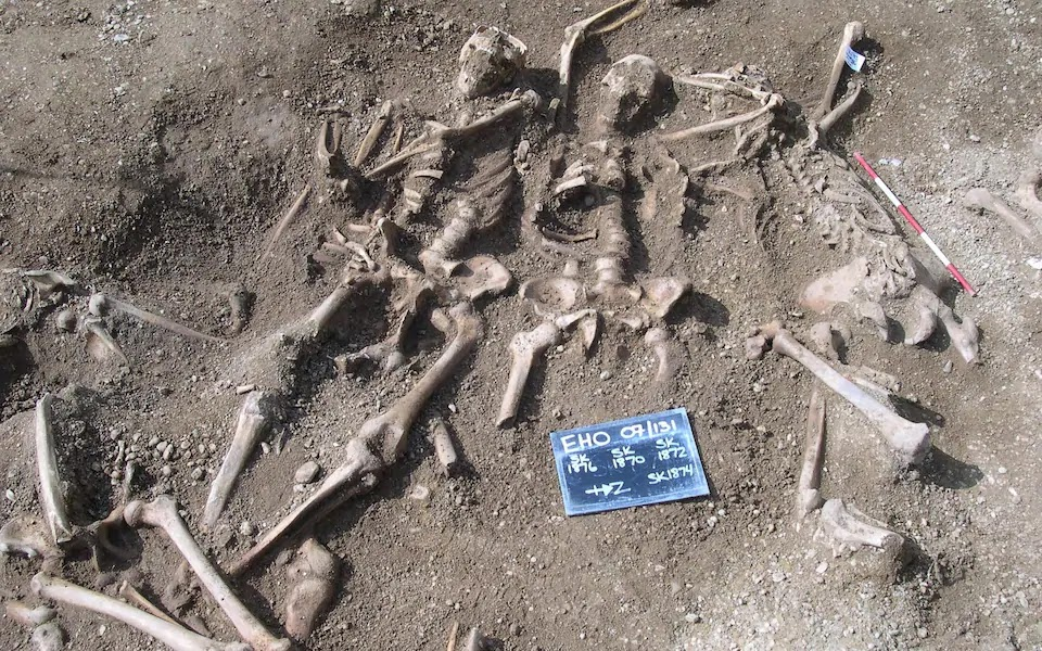 Viking skeletons from a mass grave found in Oxford. These skeletons were part of the DNA study.