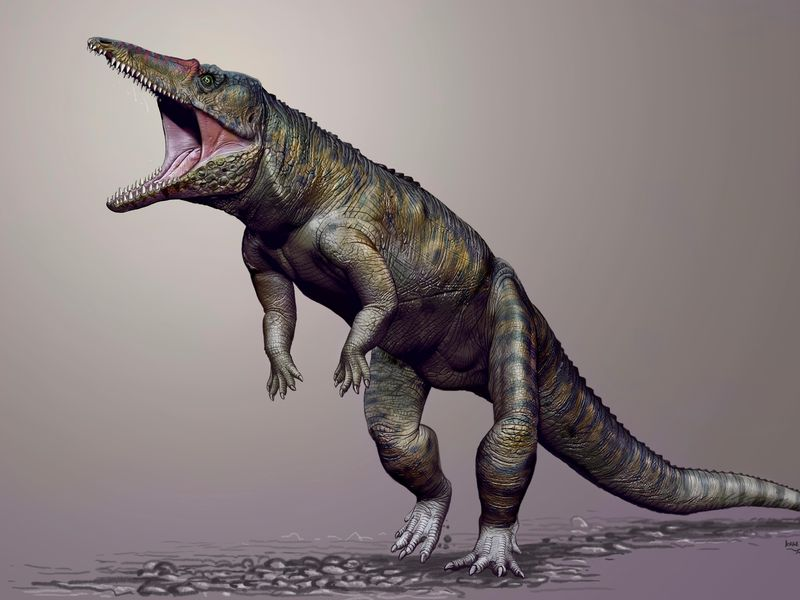 An ancestor of the modern-day croc stood nine feet tall and walked on its hind legs. It's been lovingly christened the Carolina Butcher.