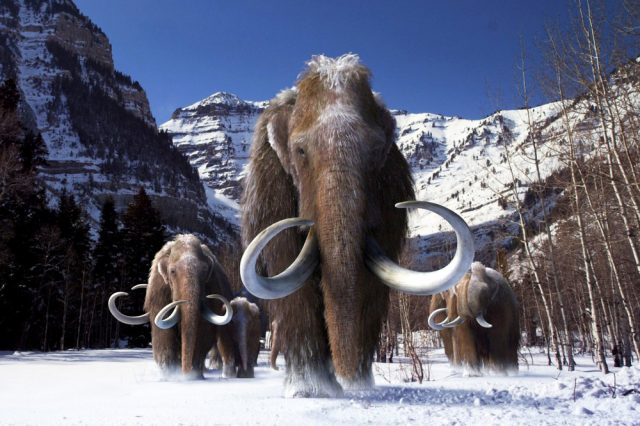 The Last Ice Age saw the end of many animal species just like it forced humans to evolve and develop to adapt to the climate.