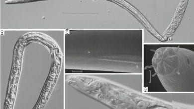 Just as the discovery of the 42,000-year-old nematodes stormed the news, nobody heard anything about it for a long time. What happened?