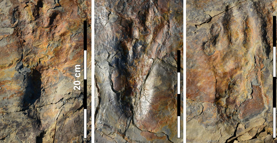 Well-preserved track impressions of the ancestors of crocodiles.