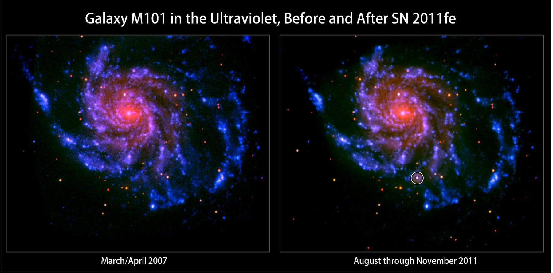 Two images from Swift's Ultraviolet/Optical Telescope of M101, a nearby spiral galaxy. On the left, you see the galaxy before SN 2011fe (a Type Ia supernova circled at the bottom of the right image). On the right, you see how much brighter the galaxy is after the star exploded. Credit: NASA/Swift/Peter Brown, Univ. of Utah