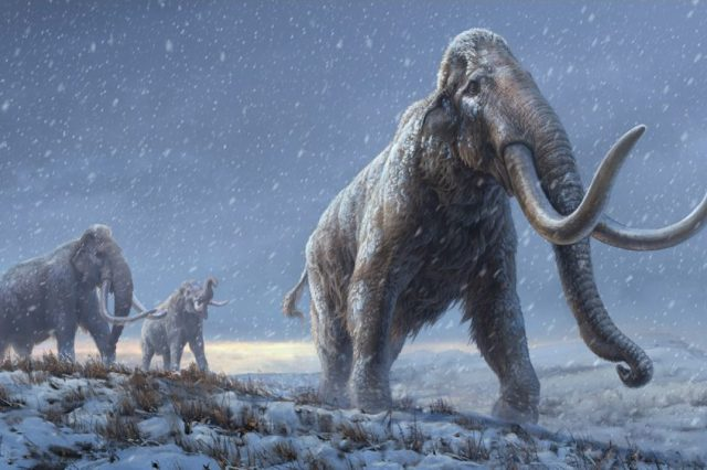 Scientists have extracted and studied the oldest DNA in history. Credit: BETH ZAIKEN/CENTRE FOR PALAEOGENETICS