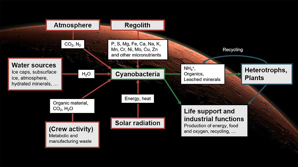 An illustration of life-support systems that could be used on Mars based on Cyanobacteria. Credit: Cyprien Verseux
