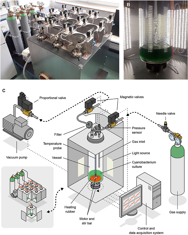 Images A and B show the low-pressure photobioreactor used for the study. Illustration C shows a scheme of the device. Credit: Joris Wegner (University of the Arts Bremen)