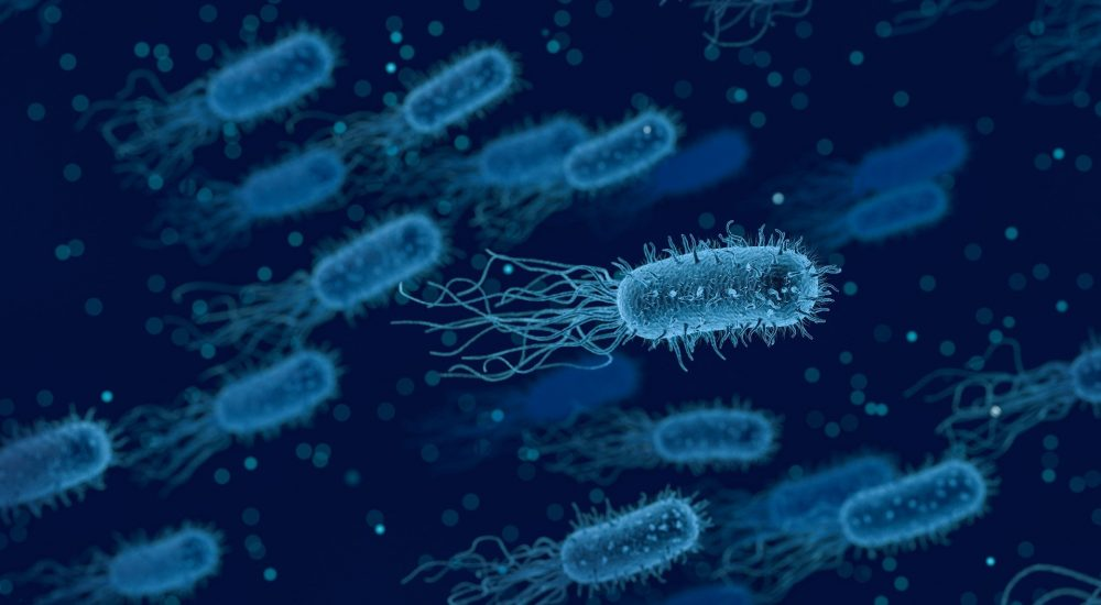 Scientists have described three new species of bacteria discovered on the ISS. Credit: Pixabay