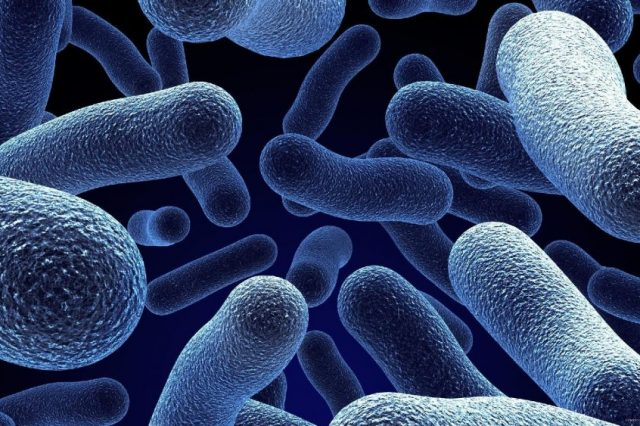 Scientists revived 100-million-year-old bacteria which are now among the oldest living beings. Credit: Jumpstory