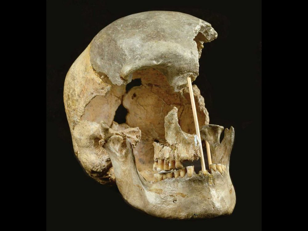 This is the reconstructed skull of the modern female individual from the Zlaty Kun cave which was used for the human genome studies. Credit: Marek Jentac