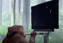 Neuralink shared their latest achievement - a monkey with an implanted chip played ping-pong with the power of thought. Credit: Neuralink