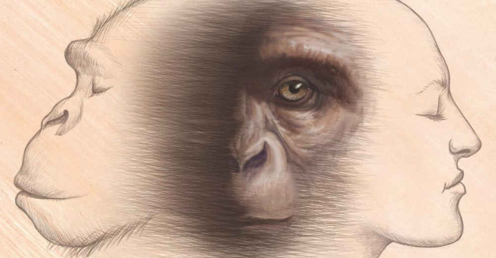 Fossil apes could answer the main questions for the reconstruction of our ape ancestry. Credit: Christopher M. Smith