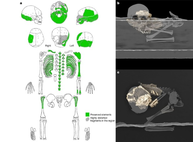 Preserved bones from the child's body and their original position when archaeologists found the burial. Credit: M. Martinon-Torres et al. / Nature, 2021