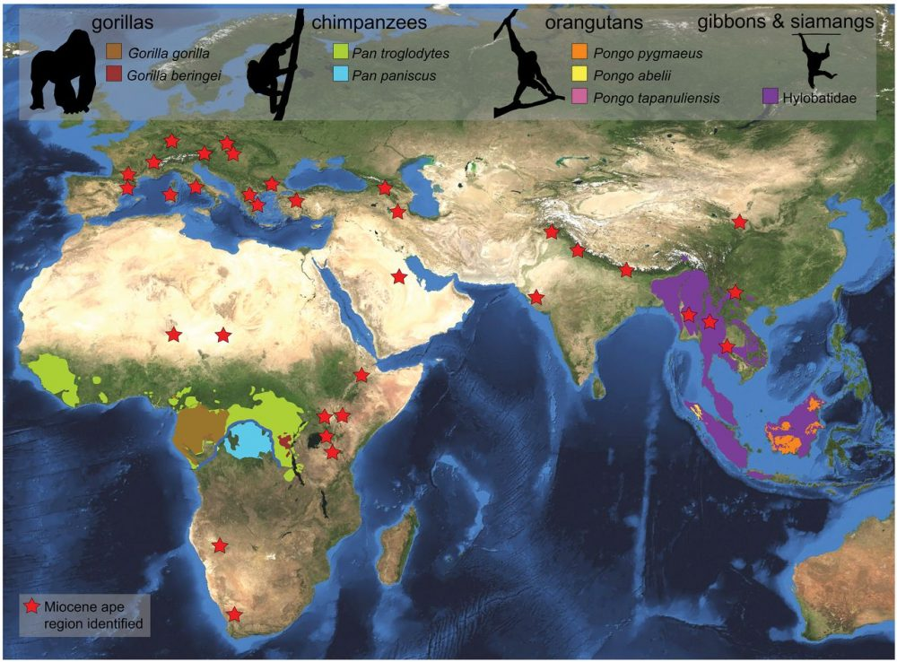 Distribution of extant and fossil ape. Credit: Sergio Almécija