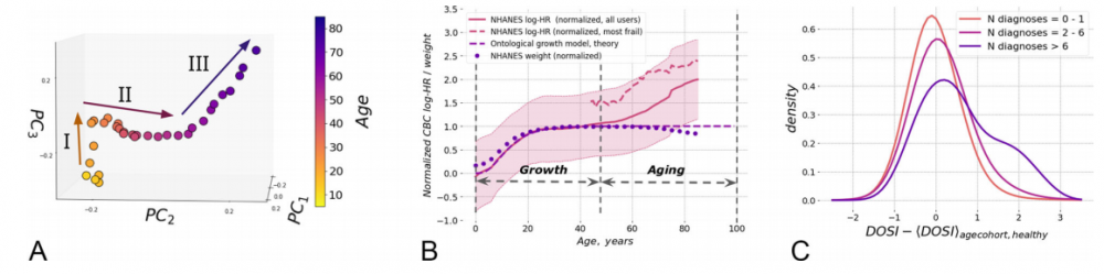 """A - the method of analysis of principal components as applied to blood analysis and the aging trajectory built on the basis of the resulting model. B - the change in the DOSI index in more """"fragile"""" Americans (red dotted line) and Americans in general (red solid line) in comparison with weight (blue dots) and predictions arising from the theory of growth and development (blue italics). C is the distribution of DOSI in the population; the older the cohort, the more people in it with strong deviations from the mean. Credit: Pyrkov et al. / Nature Communications, 2021"""