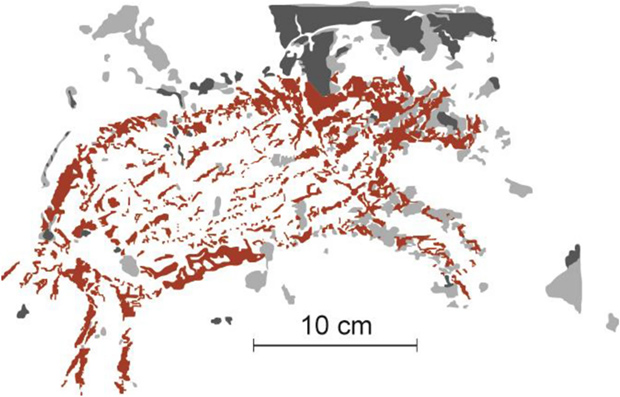 Rock painting from Leang Pattae cave. Delaminated areas according to 1950 data are highlighted in dark gray, delaminated areas according to 2013 data are highlighted in light gray. Credit: Huntley et al. / Nature, 2021