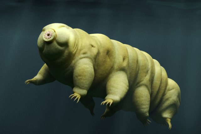 Scientists revealed the results of a curious experiment with tardigrades. Credit: Shutterstock