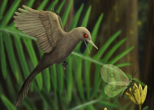 The original idea about Oculudentavis khaungraae was that it was a miniature bird. Now, scientists revealed that it was actually a new lizard species. Credit: Han Zhixin