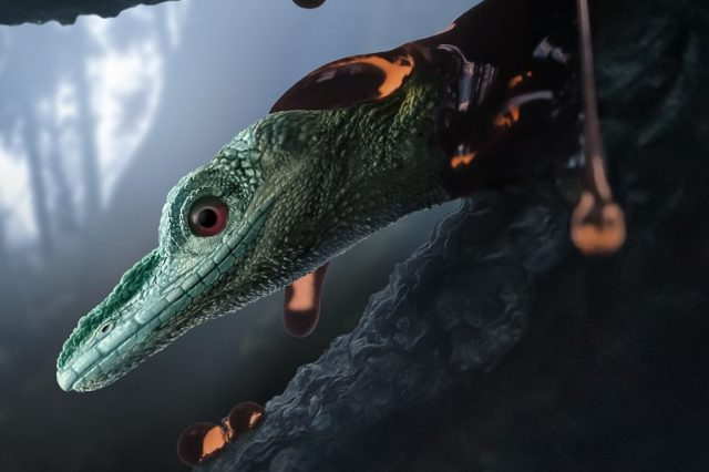 Artist's impression of Oculudentavis naga, a newly-discovered species of lizard. Credit: STEPHANIE ABRAMOWICZ/PERETTI MUSEUM FOUNDATION/CURRENT BIOLOGY