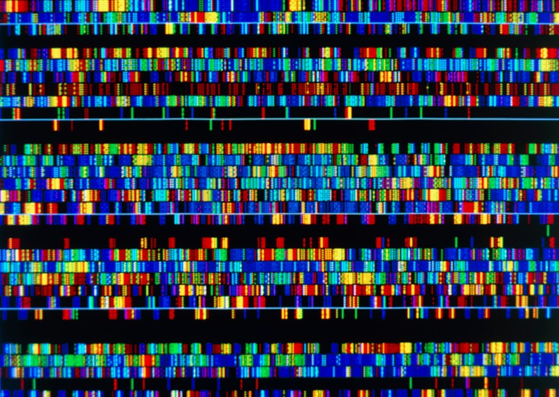 Visualization of the different sections of the sequenced human genome at the Wellcome Sanger Institute. Credit: James King-Holmes/Science Photo Library