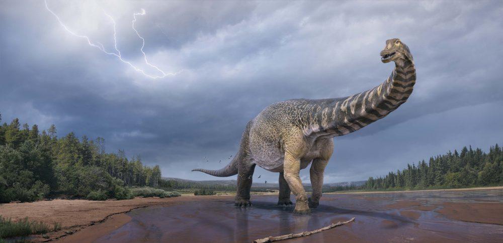 Australotitan cooperensis - Australia's new biggest dinosaur. Credit: Credit: Eromanga Natural History Museum / Vlad Konstantinov