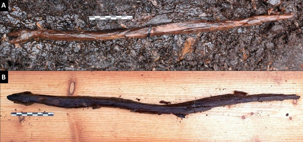 The entire snake staff imaged when discovered and after it was extracted from the site. Credit: Satu Koivisto et al. / Antiquity, 2021