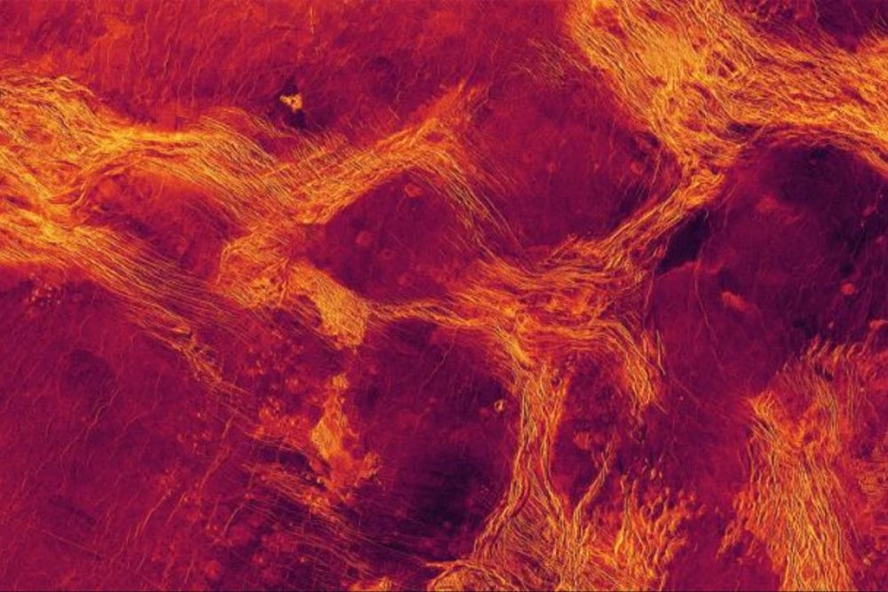 The Magellan probe's radar examined individual crustal blocks on the surface of the Lavinia lowland plain. Credit: Paul Byrne, Sean Solomon