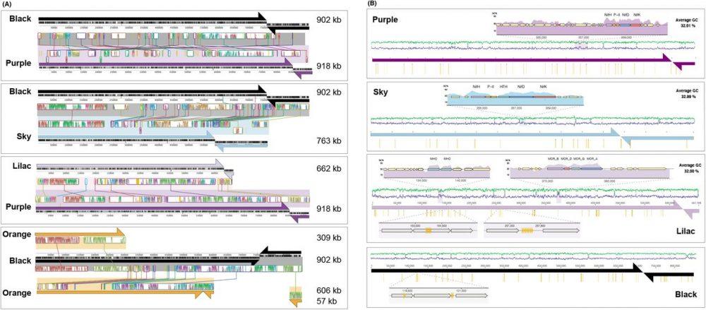 Borg DNA sequencing diagrams. Credit: Basem Al-Shayeb et al / BioRxiv, 2021