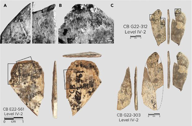 Bone tools made from animal ribs found in the Contrebandiers Cave. Credit: Emily Hallett et al. / iScience, 2021
