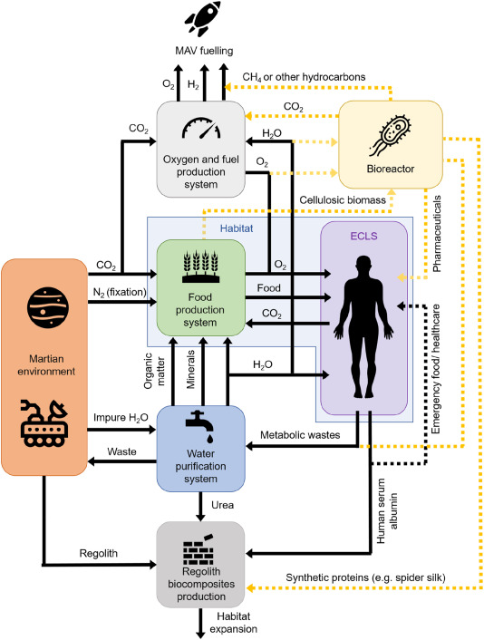 Ways of obtaining albumin on Mars. Credit: Aled D. Roberts et al. / Materials Today Bio, 2021