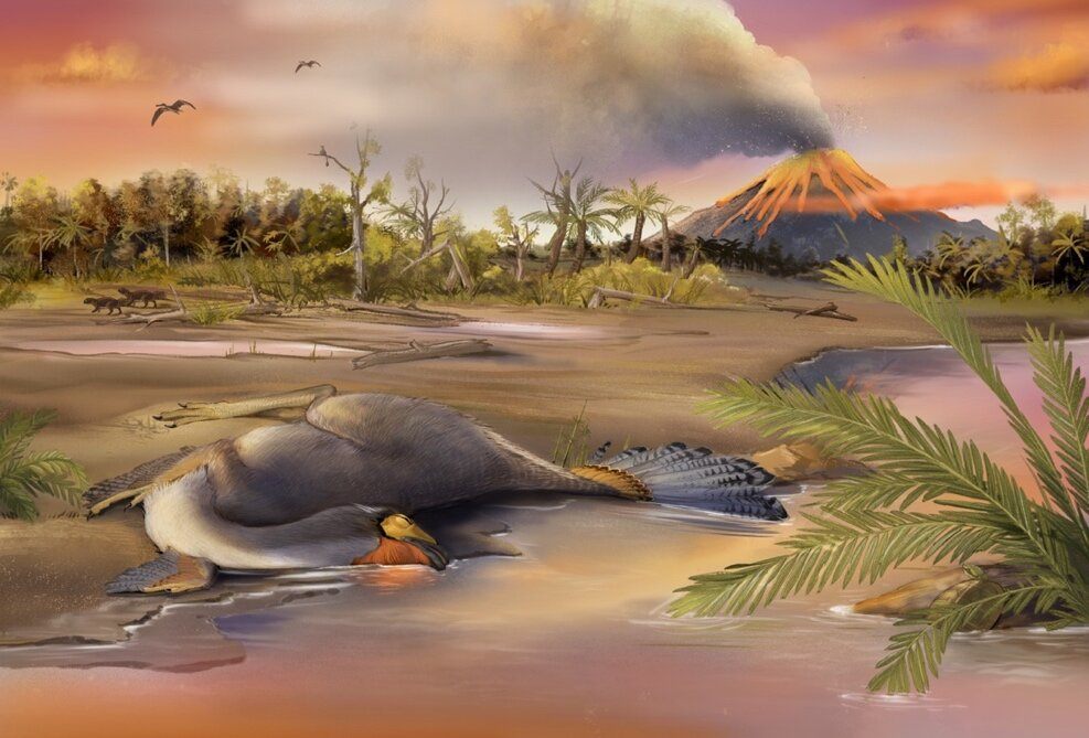 Artist's impression of the burial of the Caudipteryx. Scientists suggest that dinosaur DNA can be found in the future. Credit: Zheng Qiuyang