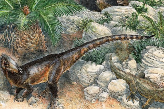 Artist's impression of the dragon dinosaur. Credit: James Robbins / Spiekman et al. / Royal Society Open Science, 2021